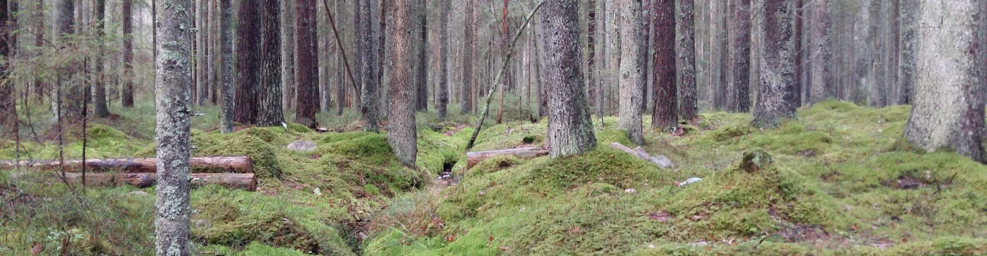 Skogspodden – en podd om skogbruk