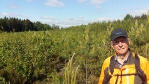 Tallungskogen i Vassemåla, Småland. Ca 9000 tallar och 400 gran/ha. I sänkorna är det planterat gran 2500/ha. Och massor av löv förstås. Kom gärna förbi och kika. Fullt med blivande Vimmerbytallar!