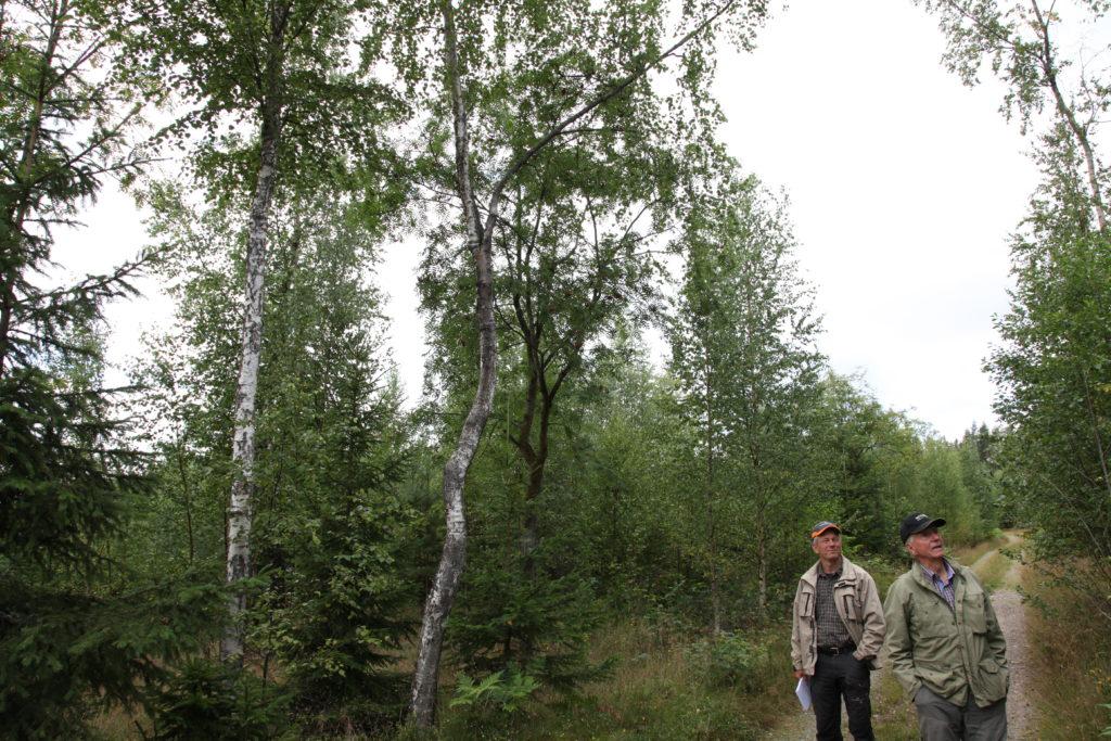 Jonas och Bosse vid rönnskogen