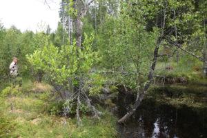 Källan i skogen