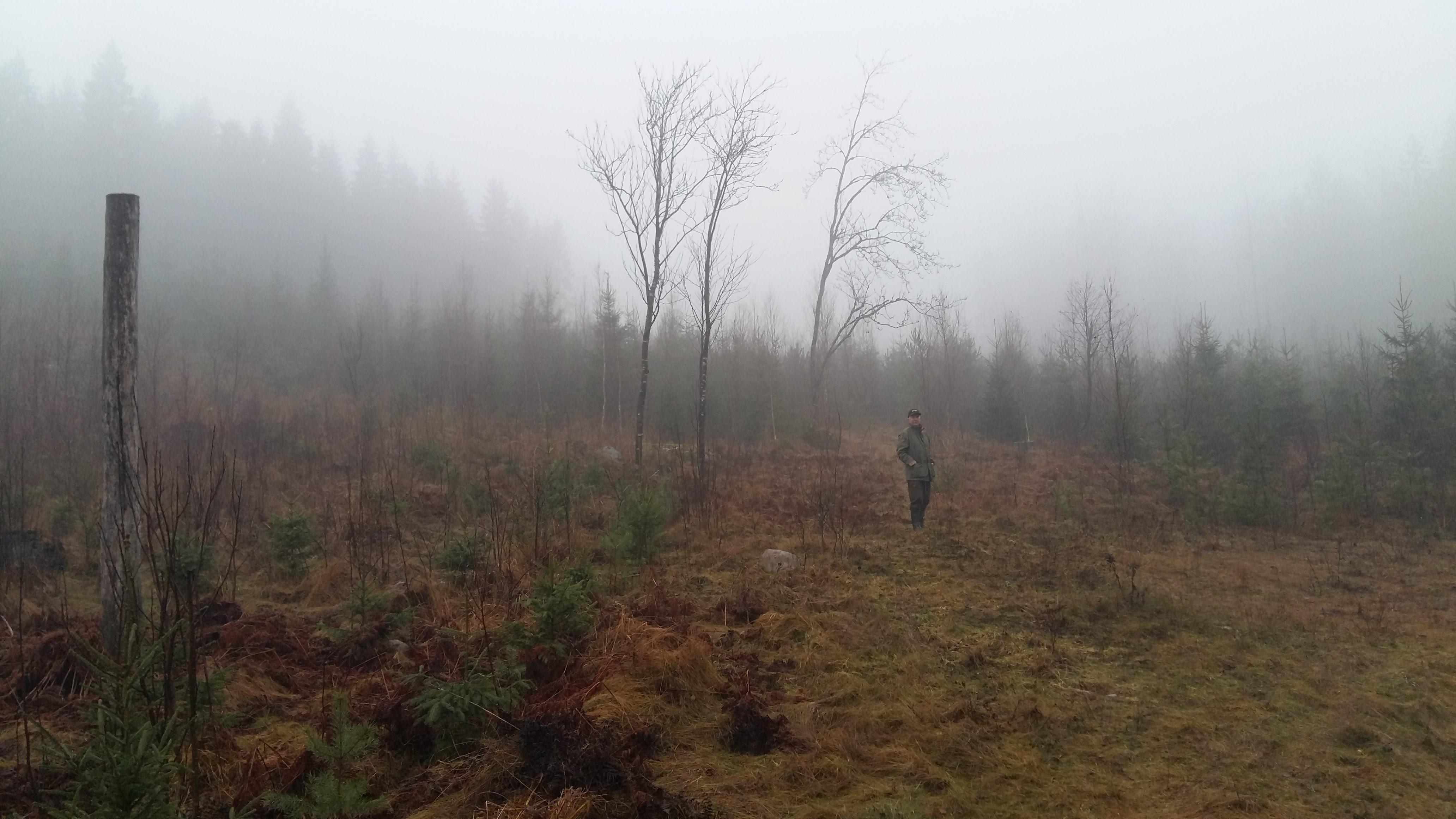 Bosse står framför en lång sluttning som är planterad med gran och sådd med tall mellan granarna. Tallen kommer fint trots den bördiga marken, G30-G34. Notera de fina rönnarna bakom Bosse.